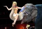 slon u cirkusu