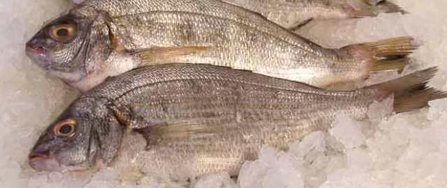 smrznuta riba