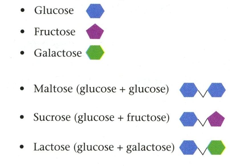 Go Back  gt  Gallery For  gt  Monosaccharide Disaccharide PolysaccharideMonosaccharide Disaccharide Polysaccharide