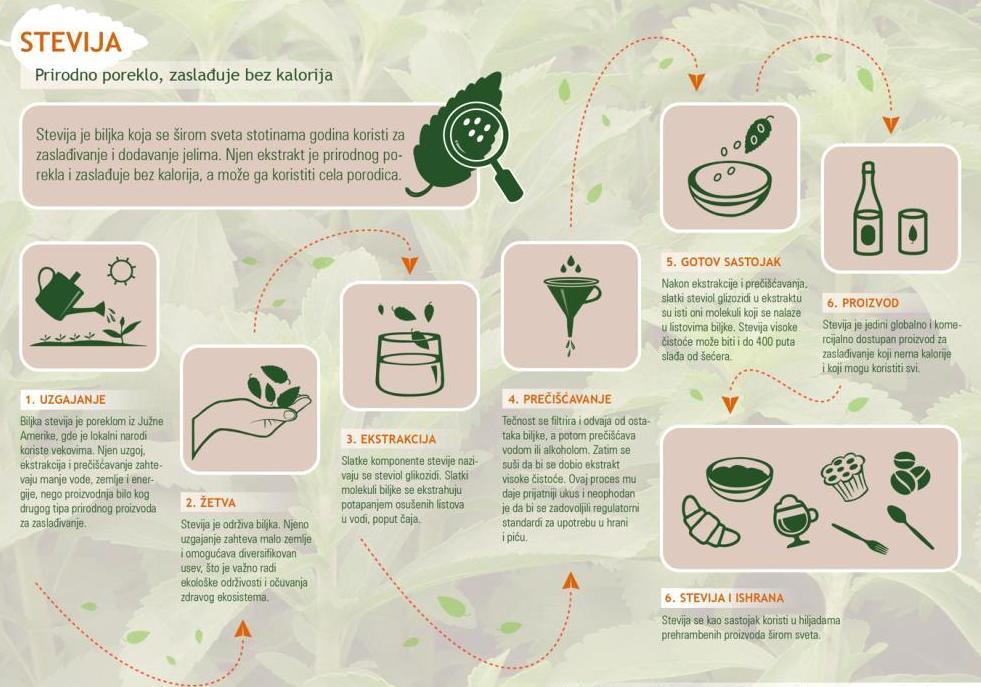 stevija infografik
