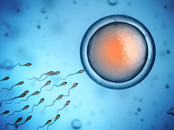 sperm friendly diet