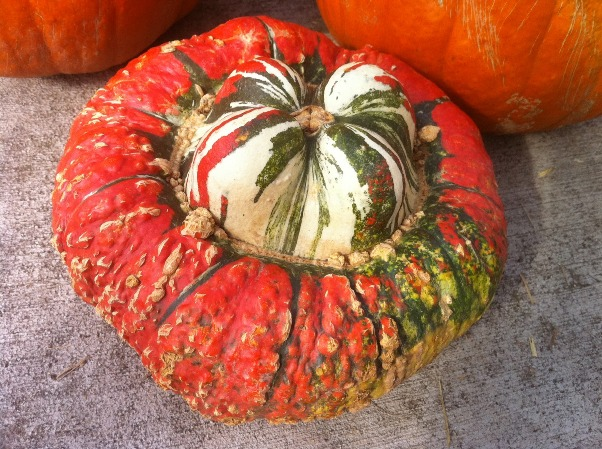 Turkish Turban Squash 1