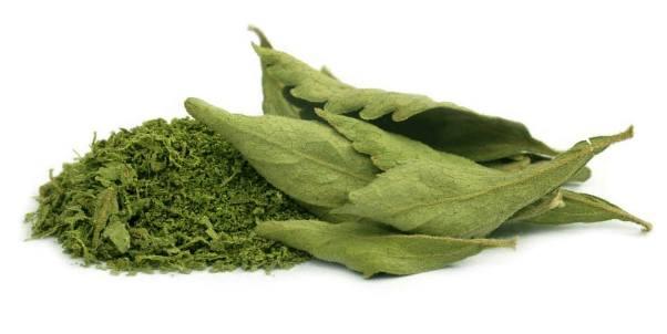 zelena stevija 1
