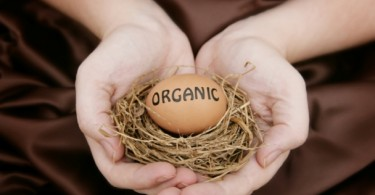 A_organic_egg