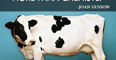 trust-cows