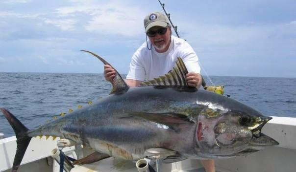 velika tuna